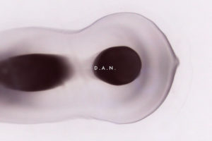 D.A.N.、新曲「Aechmea」が10/16にデジタルリリース!