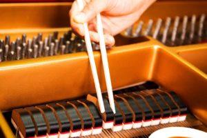 Xiangyu(シャンユー)、ピアノダンパーとしめ鯖が似ていることを綴った「ピアノダンパー激似しめ鯖」を本日デジタルリリース!